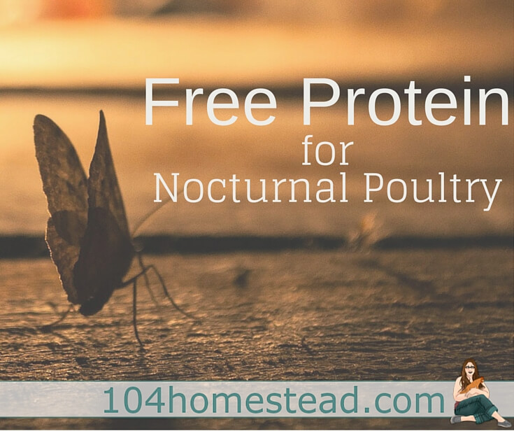 What if I told you I had a free method of increasing your poultry's protein levels while allowing them to hone in on their natural instincts? A solar bug trap!