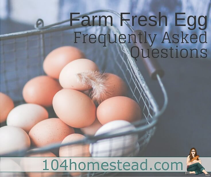 Discover the answers to farm fresh eggs frequently asked questions.Why farm yolks are so dark? Does a blood spot mean it's fertile? Does the color change the flavor?