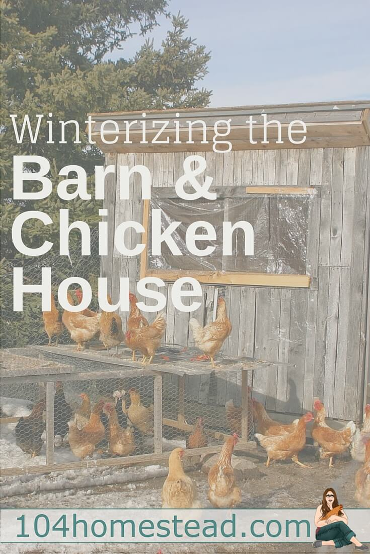 Its getting chilly with winter on the way and it's time to start thinking about winterizing the chicken house and barn. Here are great tips to get you started.