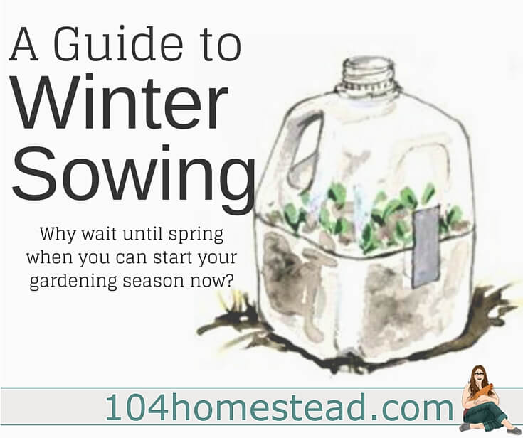 Whether you are a backyard hobby homesteader or an avid homesteader on your journey to live off-grid, these are the top homesteading articles you want to be reading.