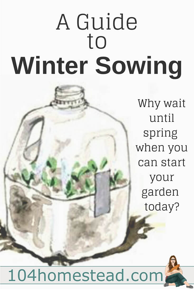 Winter sowing involves sowing the seeds outdoors in miniature greenhouses during the winter, allowing them to germinate naturally during the spring.