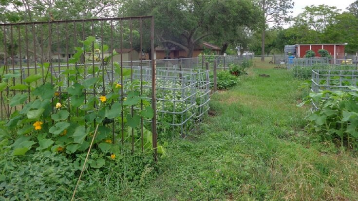 Angi refers to herself and her family as lazy homesteaders. And that is okay. Homesteading doesn't have to be all or nothing.