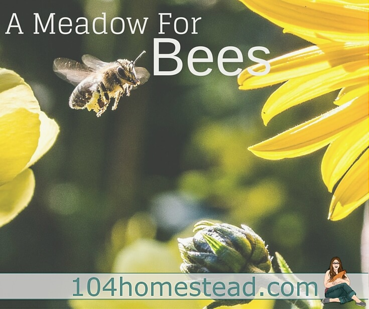 Native bee populations are suffering.They refer to it as Colony Collapse Disorder. You can help by planting native bee-friendly flowers.