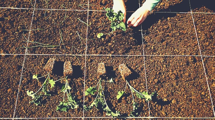 Before you start digging, there are two key things you need to know to make sure your plants are successful in the garden - hardening off and transplanting.