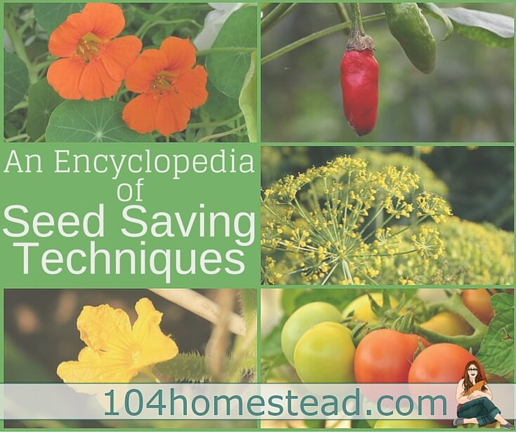 A resource for everything you could need to know about seed saving, from vegetables to herbs to flowers. Learn how to properly save seeds.