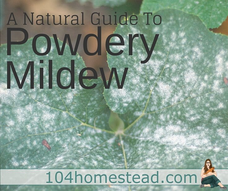 Natural Treatment Powdery Mildew