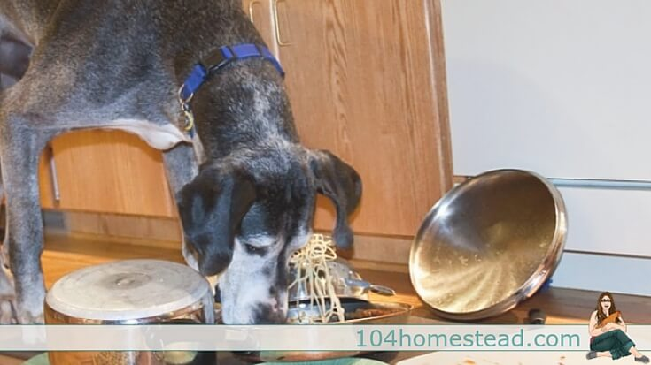 Do you want your pet dog to receive the right amount of nutrition he needs and save money at the same time? Why not try preparing a healthy homemade dog food?