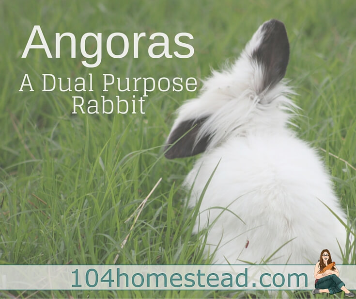 Our French Angoras are the perfect example of a double duty animal. We use our angoras for compost and fiber for crocheting and for other yarn crafts.