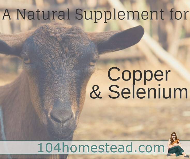 A inject-able selenium supplement and copper boluses are available, but some goats have died from toxicity. Mineral Mojo is a safer natural option.