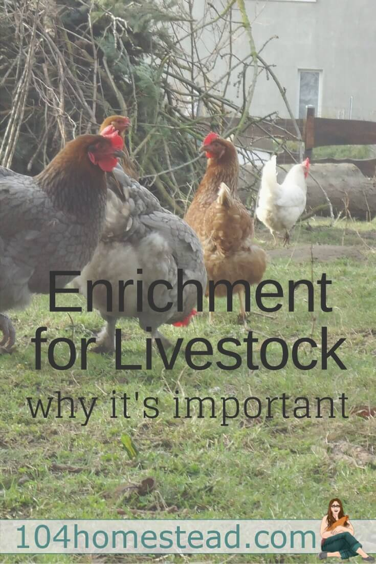 Animal enrichment is activities that create a more stimulating environment for the animals and elicit some of their natural behaviors.