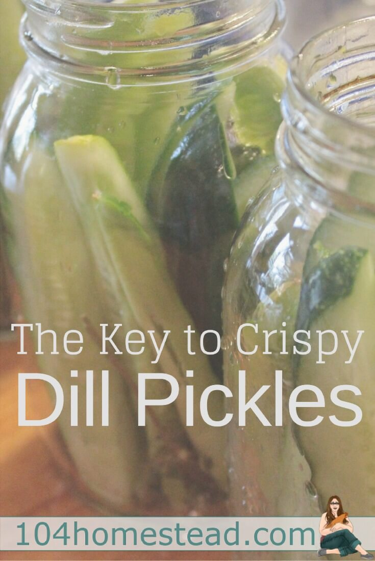 There are a lot of dill pickle recipe ideas online, but there is something they all lack. The secret to crispy pickles. A single surprise ingredient.