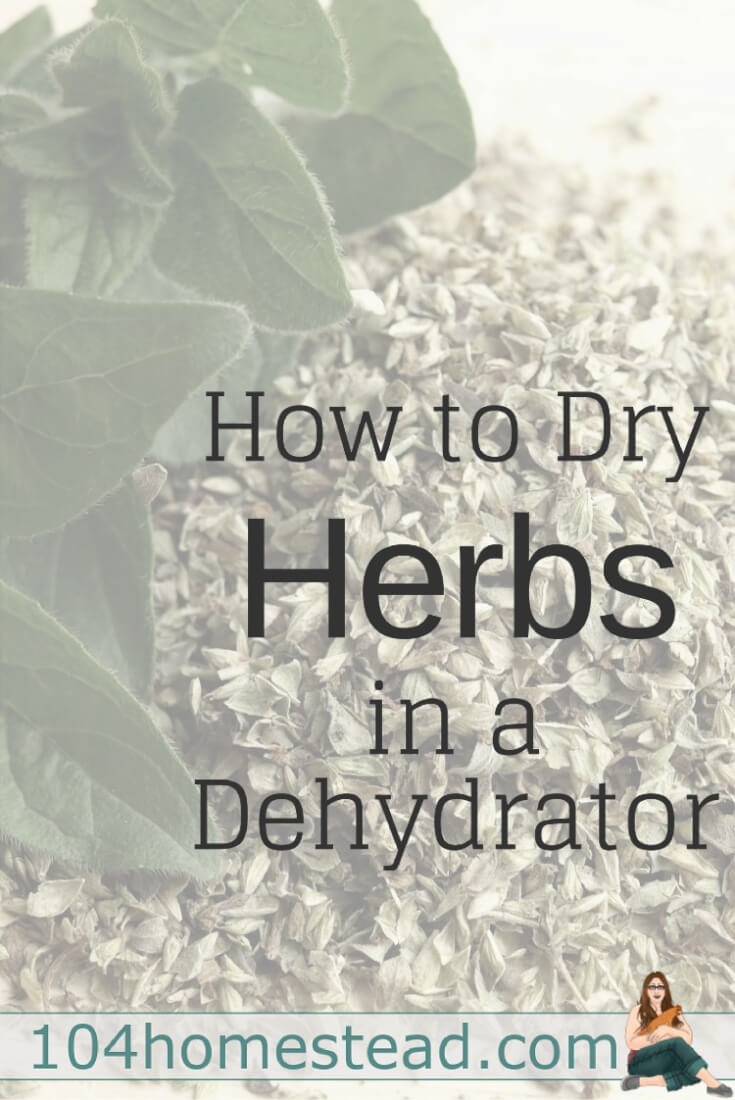 You can simply bring herbs indoors and hang them as bundles from hooks, but it's easier and faster to dry herbs with a dehydrator.