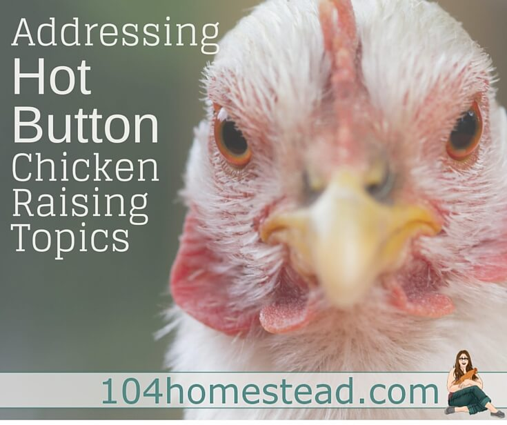 Everyone has there own way of raising their flock. Some people feel their way is the only right way. But is there a right way? Let's talk about all chicken hot topics.