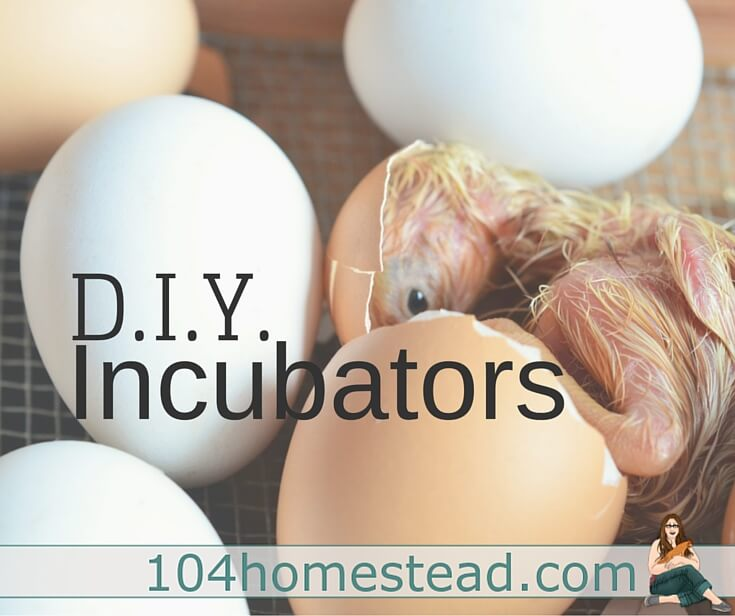 Why spend crazy amounts of money on incubators when you can easily make on with things around your home? Check out these great DIY incubators I found.