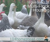 Can You Keep Different Sized Poultry Together?