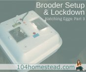 Chicken Eggs: Day 18 – Lockdown & Brooder Setup