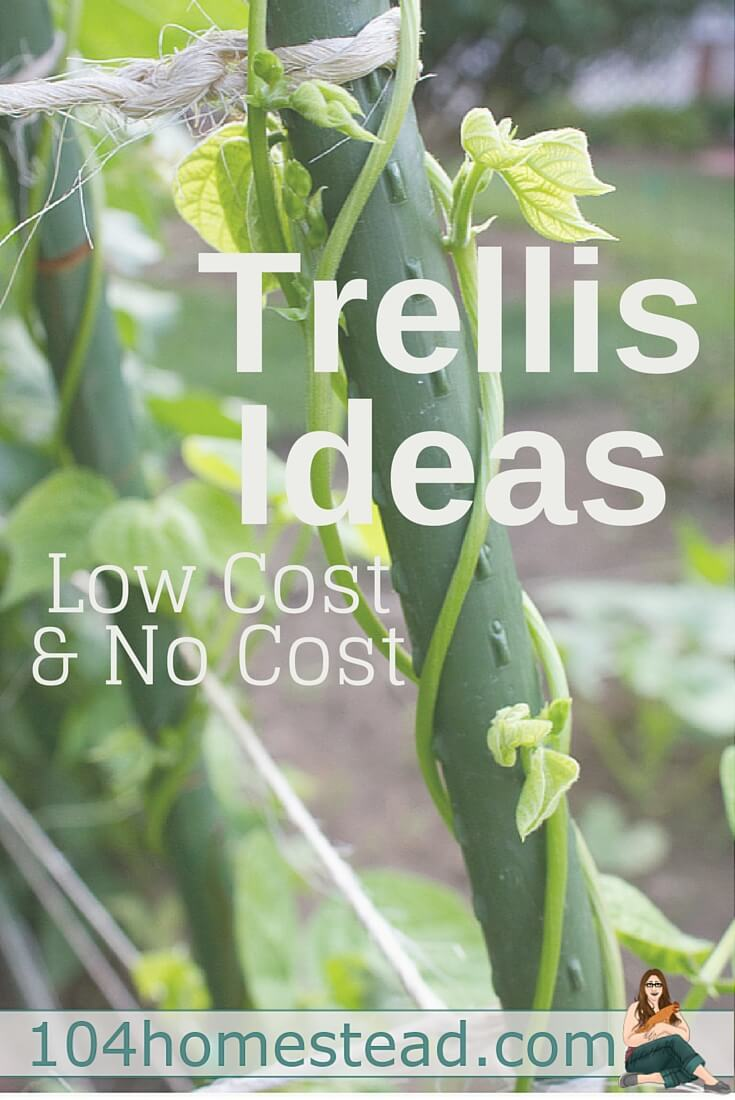 Low Cost & No Cost Garden Trellis Ideas