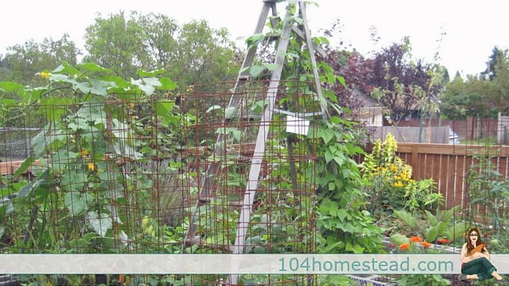 Trellises Serve An Important Function In The Garden. They Can Be Completely  Utilitarian Or They