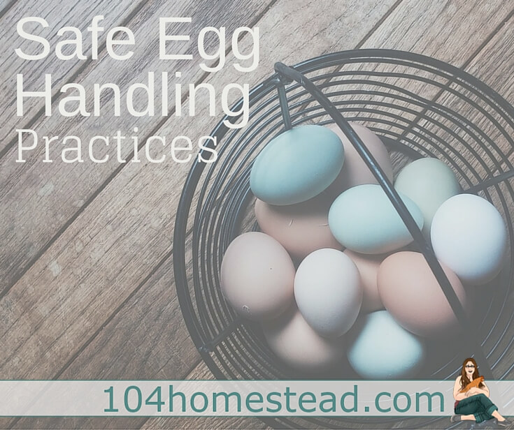 People are passionate about how they choose to store their freshly collected eggs. Cultural and generational differences sway views. Lets talk egg safety.