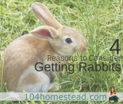 4 Reasons to Consider Getting Rabbits for Your Homestead