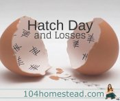 Hatch Chicken Eggs: Day 21 (The Hatching Process & Losses)
