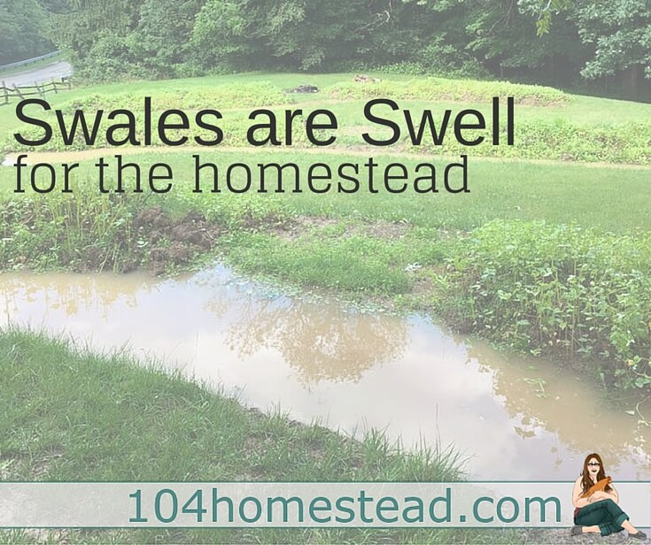 Swales are an amazing permaculture implementation for your homestead - It's a designing system that work harder than you do.
