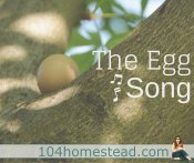 How Much Noise Do Hens Make? The Egg Song
