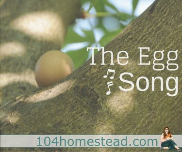 Why a hen sings after laying an egg and what the Egg Song sounds like. It will be music to your ears when you get your first chickens.