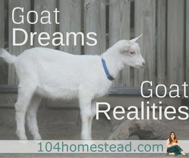 """Are goats worth it?"" And to that one question, I can answer an unequivocal ""Yes."" New skills are not won easily; they have to be earned."