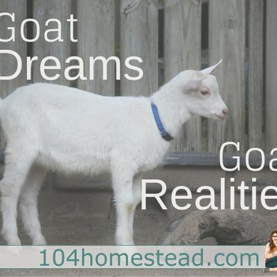 Goat Dreams, Goat Realities