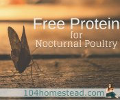 FREE Protein for Nocturnal Poultry