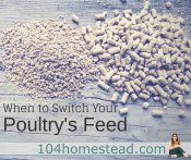 When to Switch Your Poultry's Feed
