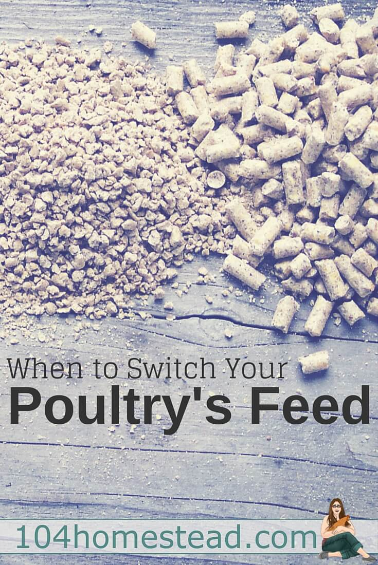 You might be wondering when is the right time to switch to the next stage of feed. Timelines for those using commercial feed. Plus, feeding roosters, drakes, toms.