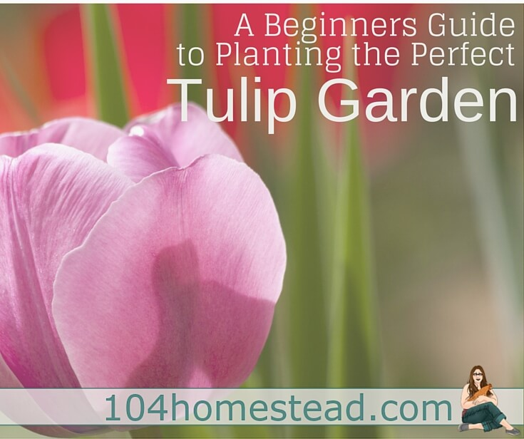 Tulips are also one of the easiest flowers to grow in your garden. Plant the bulb in fall and leave it alone to find great flowers in the spring.