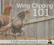 How to Safely Clip Chicken Wings
