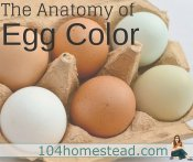 The Anatomy of Egg Color
