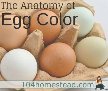 At their core, all eggs are either white or blue. Discover the science behind egg color and what makes eggs all the shades we see.