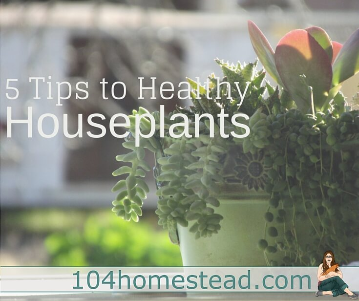 I'm an outdoor garden person. It's where my thumb shines the greenest. These five tips have helped me keep my houseplants happy and healthy.