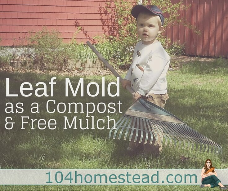 Making leaf mold isn't a quick process. It takes time, but the results are worth the wait. It adds compost to the soil and it acts as a free mulch material.
