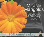 Miracle Marigold Flowers