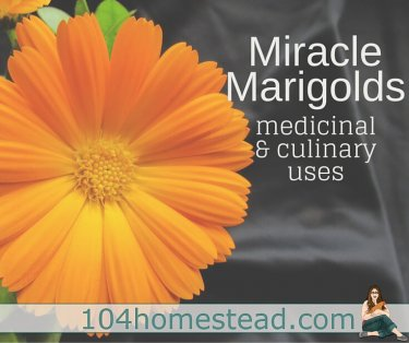 Marigolds flowers are more than just a pretty flower. They are miracle flowers. After reading this, you'll never look at a marigold flower the same way.