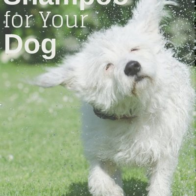 Making Natural Shampoo for Your Dog