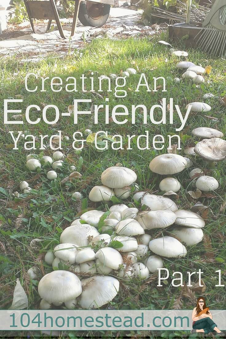 The human footprint on planet Earth continues to grow, but you can make a difference in your very own backyard. Create an eco-friendly yard and garden.