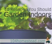 10 Fabulous Reasons to Garden Indoors