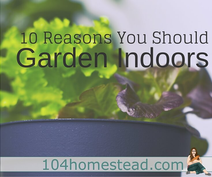Sprouts, herbs and shallow-root vegetables can be part of your garden indoors. If you have the space you can plant pretty much anything. Here's 10 reasons to start.