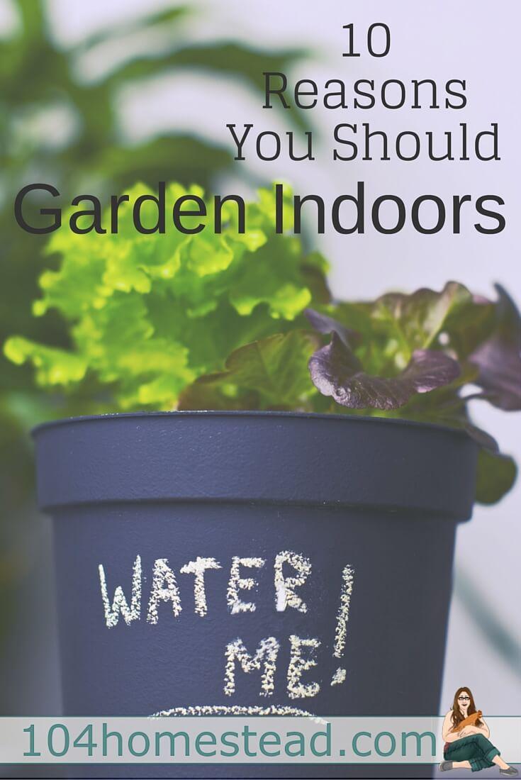 garden-indoors2