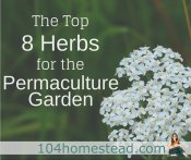 8 Herbs for the Permaculture Garden