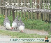 How & Why to Quarantine Chickens Correctly