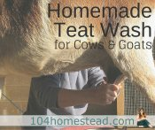 Homemade Teat Wash for Goats & Cows