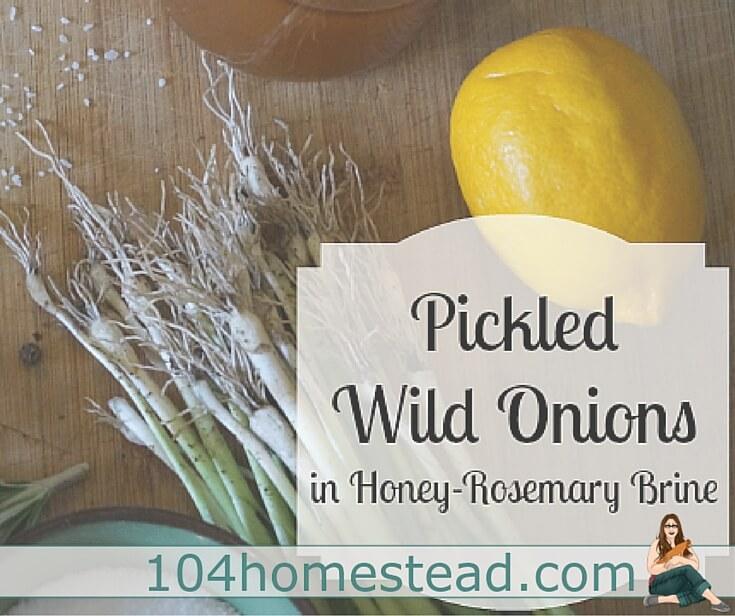 Pickled Wild Onions in Honey-Rosemary Brine